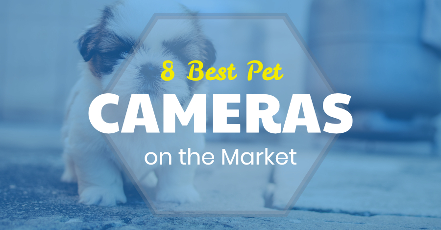 Best Pet Cameras - Pet Monitoring Video Camera Reviews