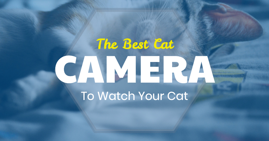 Best Cat Camera - Cat Looking At Collar Cameras + Watching