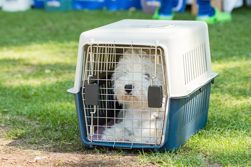 Small white dog in crate all alone and looking out.